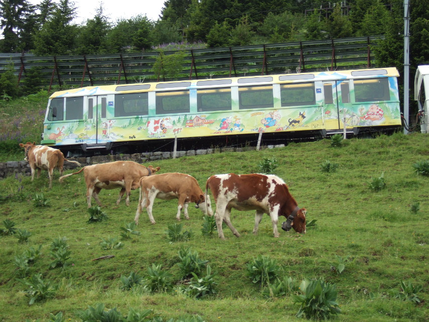 A fun way to travel the Alps is to take a trip on the children's mini-train.